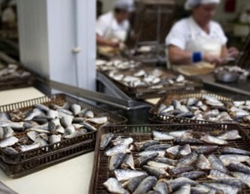 Fish and caviar production and processing